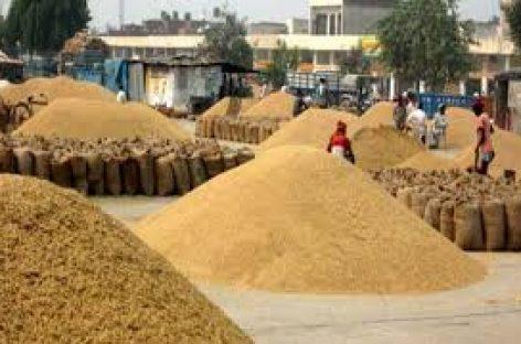 किसान को एसएमएस आया कि वह दिये गये ब्योरे के अनुसार अपनी 42 क्विंटल सरसो लेकर मंडी आ जाये। जब ट्रॉली लाद कर वहां पहुंचा तो उसे बताया गया कि उसे 42 क्विंटल नहीं केवल 32 किलोग्राम सरसो लाने को कहा गया था। किसान ने अपना सिर पीट लिया…